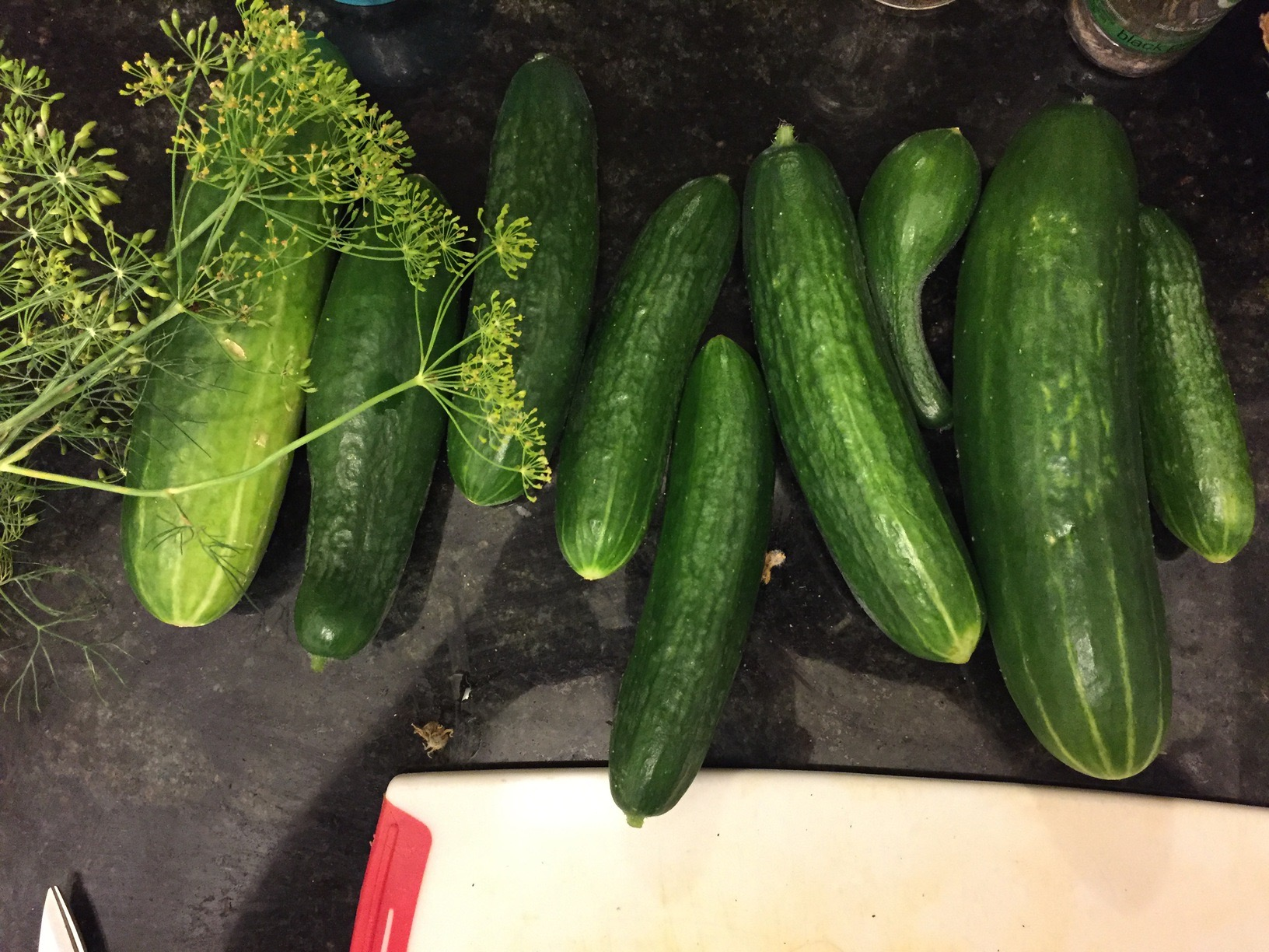 Cucumbers and dill flowers/seeds from the garden, ready for pickling